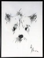 Obraz do salonu artysty Bożena Wahl pod tytułem Pies pastel 3