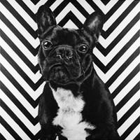 Obraz do salonu artysty Sławomir Setlak pod tytułem Francuski piesek ll