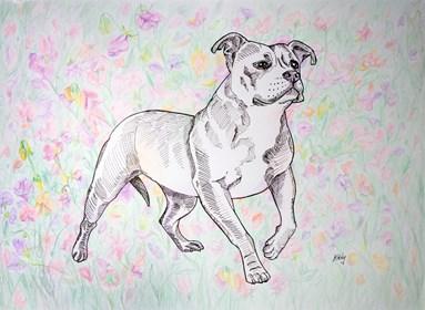 Obraz do salonu artysty Marta Horodniczy pod tytułem Pies w Palheiro garden