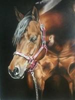 Obraz do salonu artysty Sylwia Heinrich pod tytułem Quarter Horse