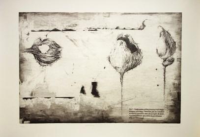 Grafika do salonu artysty Joanna Klepadło pod tytułem Nadgryzione